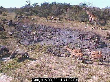 See animals live at AfricaCam